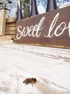 "A Sweet Little Bee with a ""Sweet Love"" Sign Hollow Furniture"